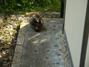 龍野ヶ岡(龍恋の鐘)の入り口のトイレにいた猫