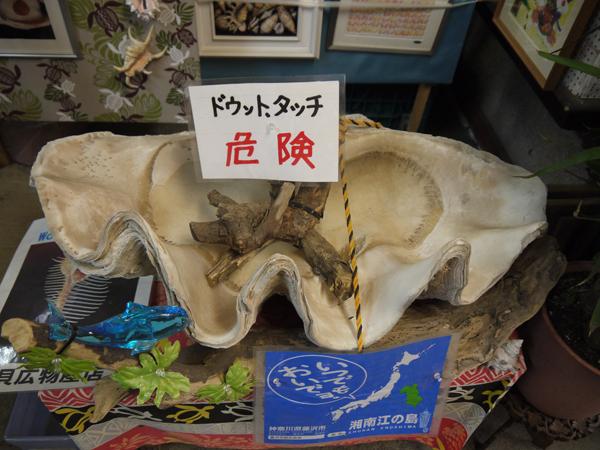 世界の貝の博物館 ファンキー貝