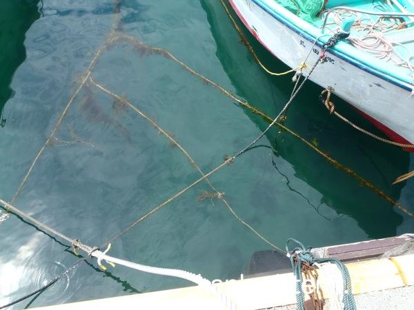 足付漁港の水質