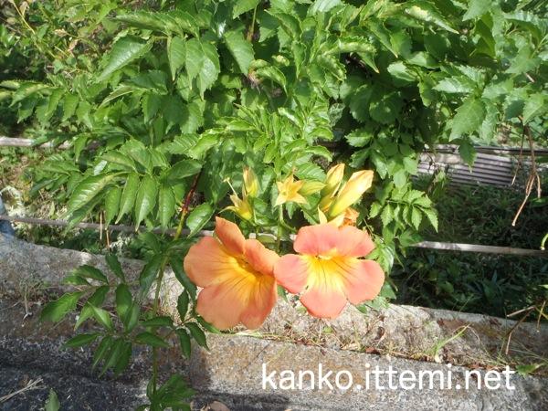 式根島 道の花
