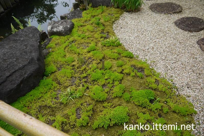 長谷寺の苔